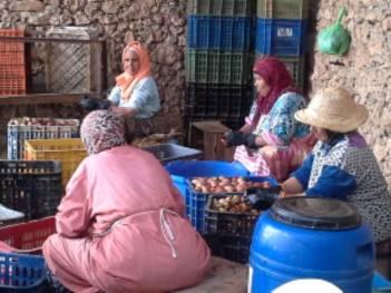 Travail sur les Figues de Graine de Barbarie, au Maroc